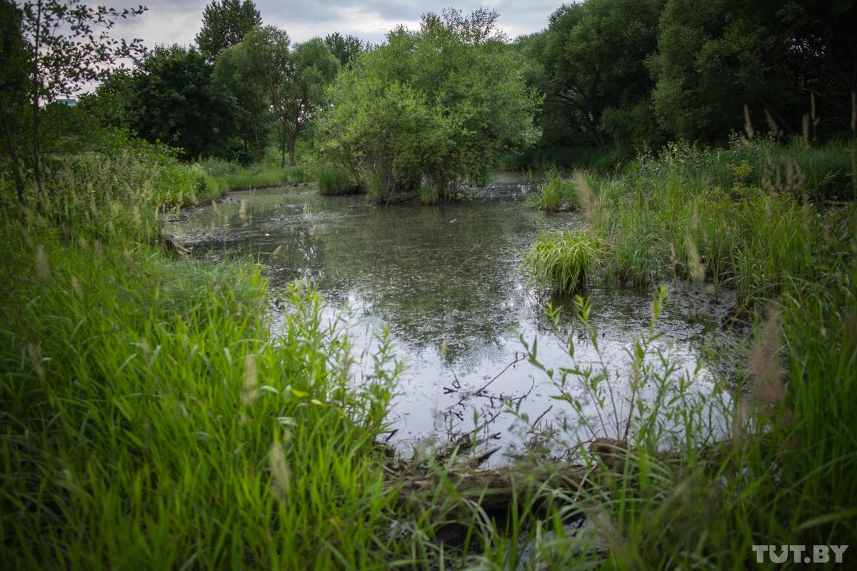 Река Мышка ждет реконструкции